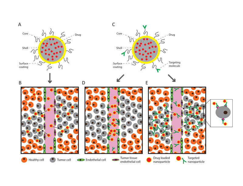 Figure 1. A: General design of a nanoparticle loaded with drug. The core/shell/surface coating can be composed of a variety of different materials, which has resulted in an enormous diversity in the design, and hence properties, of different nanoparticles. B: When a drug loaded nanoparticle is injected into the blood, it can leak into the tumour tissue due to the leaky tumour blood vessels. C: General design of a targeted nanoparticle loaded with drug. D: Nanoparticles can be specifically targeted to the cells making up the tumour vasculature. When these are injected into the blood, they accumulate in the tumor vasculature. The targeting and subsequent disrupting of tumour blood vessels is a promising therapeutic strategy. E: Nanoparticles can also be specifically targeted to cancer cells. When these targeted nanoparticles are injected into the blood, they accumulate in the tumor and bind to tumor cells, increasing the amount of drug delivered to individual cancer cells.