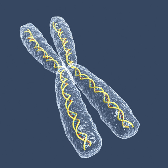 X chromosome (Illustration: iStock)