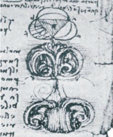 Leonardo da Vincis fremstilling av aortaklaffen i venstre hjertekammer