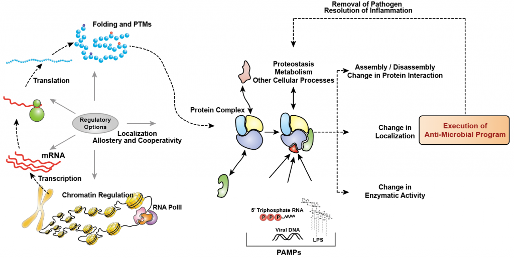 Multiple regulatory options of a cell during perturbations such as infection