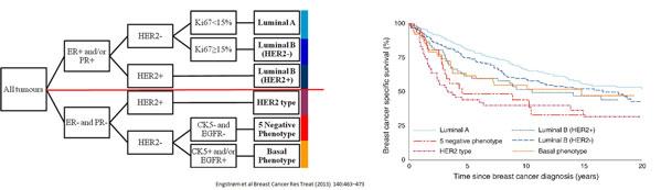 Grafikk over inndeling av brystkreftsvulster.