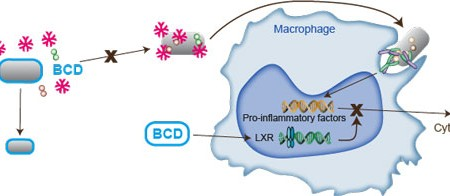 Infographics showing cholesterol crystals and macrophage