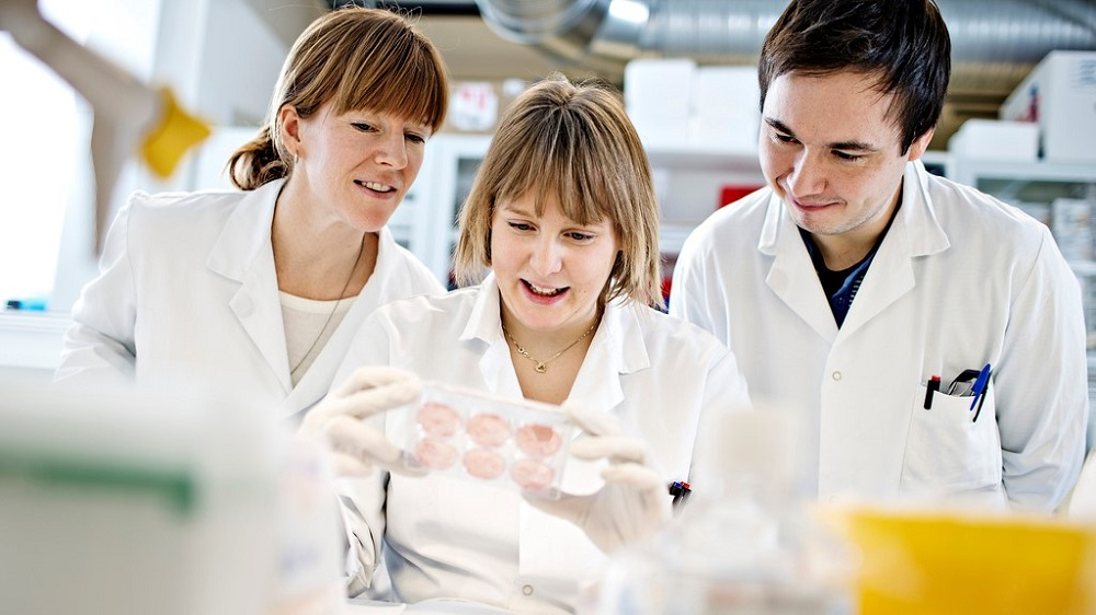 Studerer celleprøver av beinmargskreft i laboratoriet. Foto