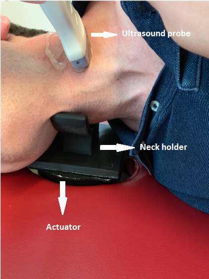 an ultrasound thyroid scanning. A 3-D printed neck holder is placed on the actuator and displacements are imaged using a linear ultrasound probe.