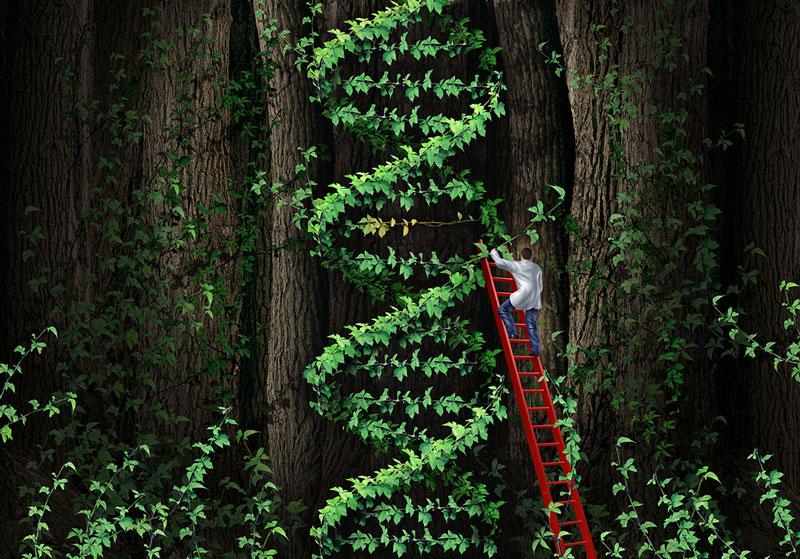 Grafikk: Mann på stige, som klatrer opp en plante formet som et DNA-molekyl.